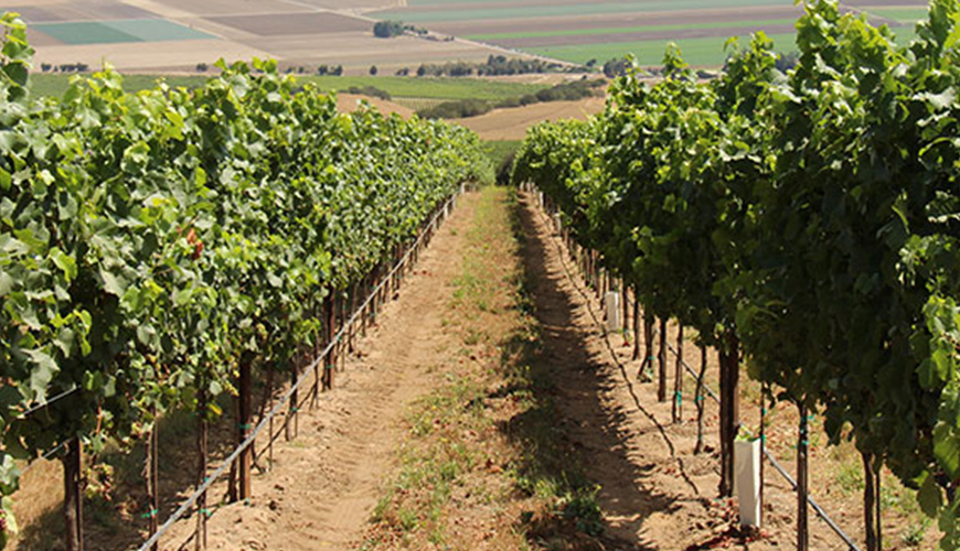 Weed Management in Orchards and Vineyards